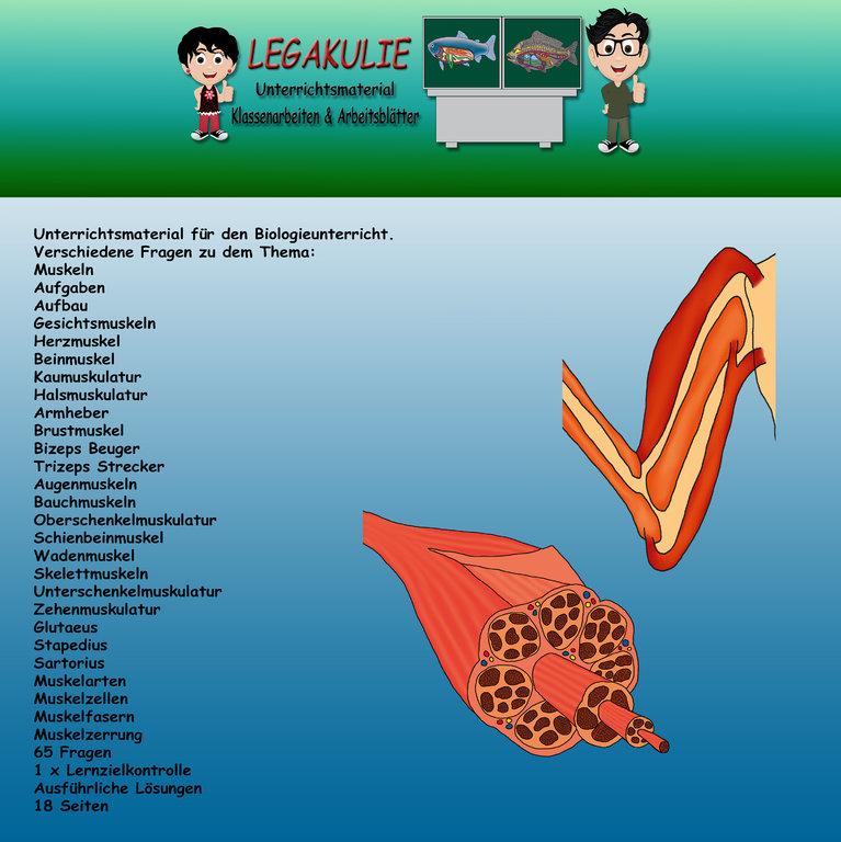 Biologie Muskeln Klassenarbeit Lernzielkontrolle PDF